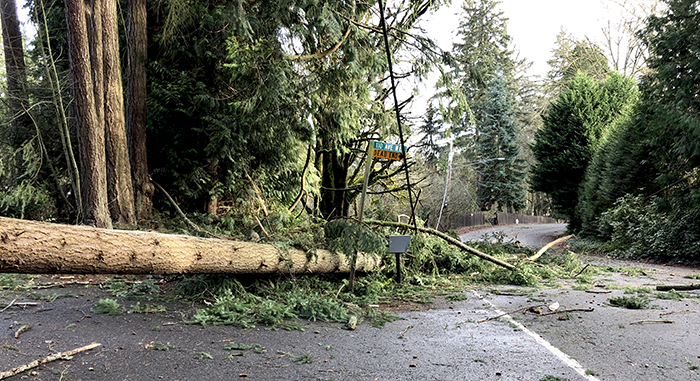 One Of The Neighbors Cleared A Path On Side Road So Those Us Our Could Get Out But Tree Were Still Blocked